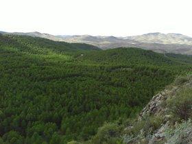 20090705080616-mularroya-2la-cueva-del-arbol-zaragoza-024.jpg