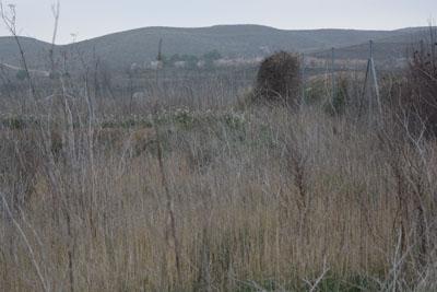 La arqueología en el desguace, por Mariano García